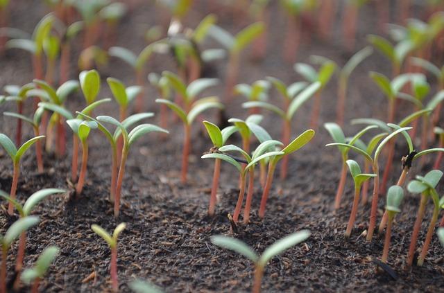 Klíčení semínek pro zdraví